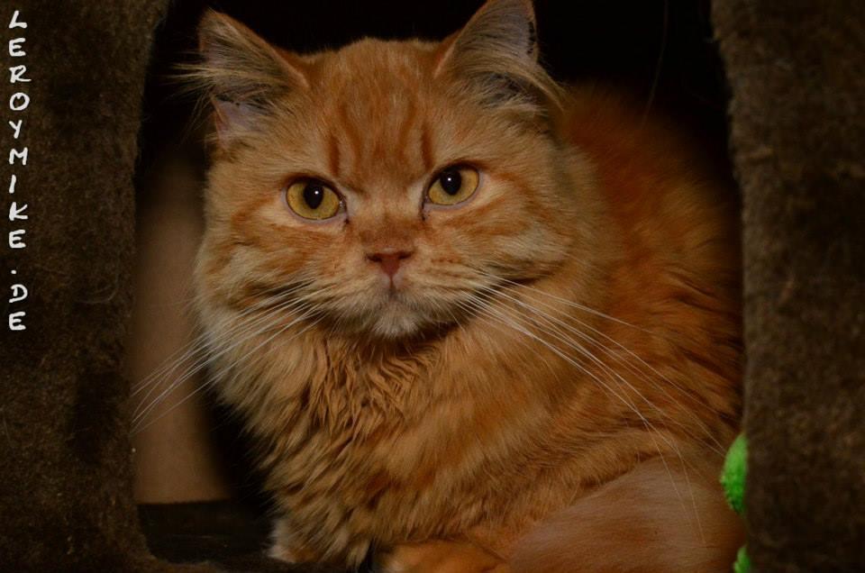 Katzen beim Tierschutz Fulda und Umgebung e.V