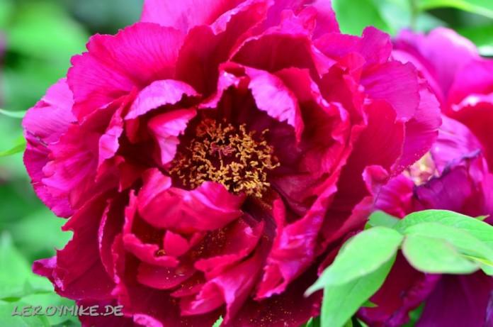 Blumen Weitere Bilder von mir findet ihr unter www.shooting-star.eu