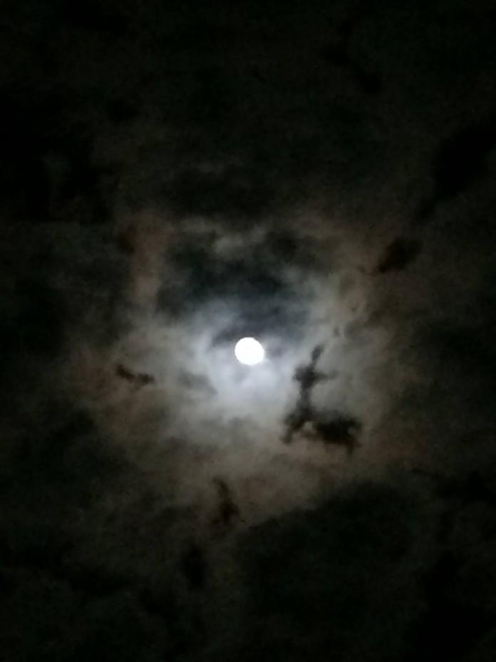 Rentier Weihnachten 2013 ein #Mond - #Lama :-D ok ein #Rentier ;-) Weitere Bilder findest du unter www.shooting-star.eu einfach regelmäßig vorbei schauen und auf dem Laufenden bleiben.