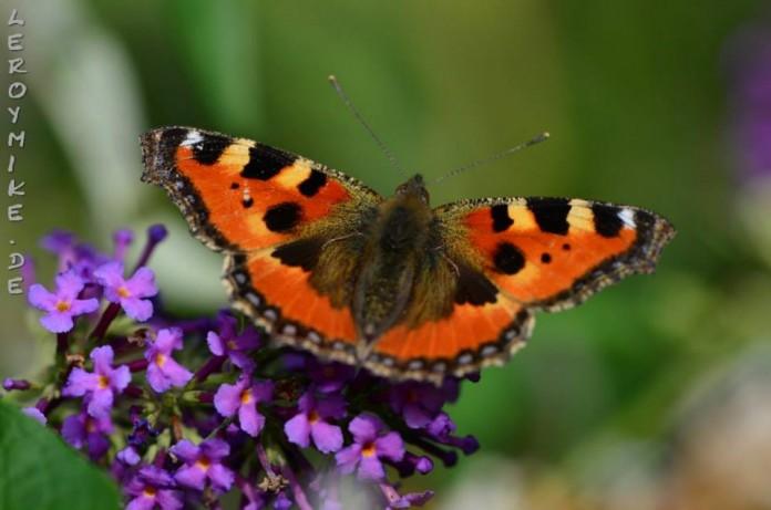 Schmetterling, Katze und Greifvogel